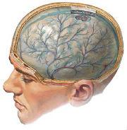 Сосуды головного мозга человека